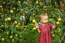 Little cute girl and appel tree