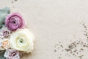 Purple Ranunculus styled stock photo