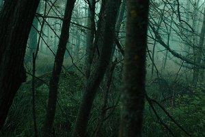 Horror woods #1