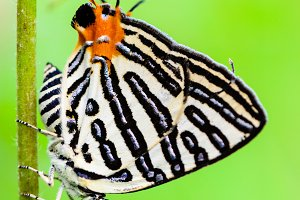 Close up butterfly