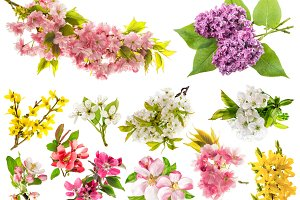 Spring blossoms flowers isolated JPG