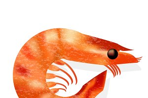 shrimp isolated realistic vector