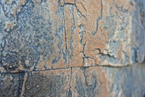 Red Stone Lichen