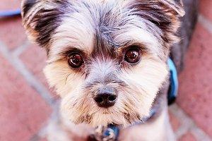 Begging Pups