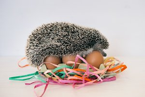 hedgehog with easter eggs
