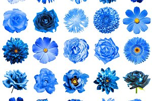 25 blue flowers isolated on white