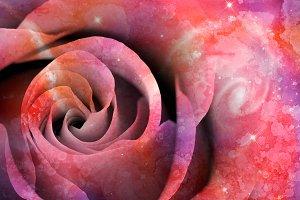 Celestial Love Rose