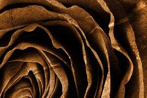 Sepia Grunge Rose