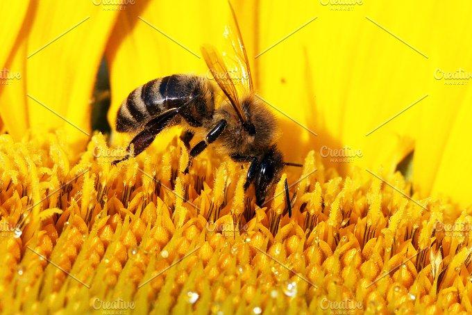 bee - Photos
