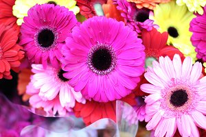 Daisies in the market