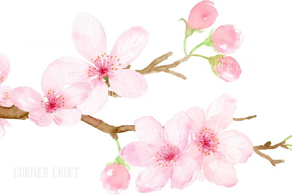 Watercolor cherry blossoms pink illustrations creative market mightylinksfo