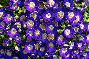 Flower Heads Background