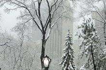 Winter at Central Park