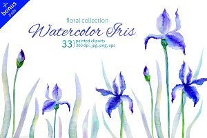 Watercolor Iris Collection