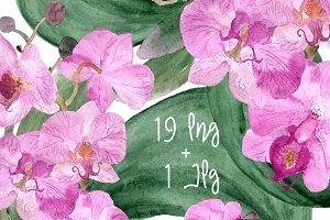 19 Watercolor Orchid Clip Art