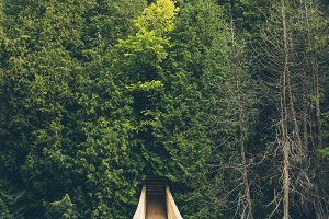 Wooden Suspended Bridge in Forest