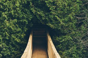 Wooden Suspended Bridge in Forest 2