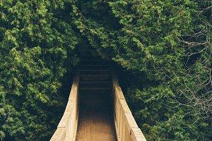 Wooden Suspended Bridge in Forest 2