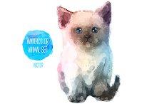 Сute little kitty (2)