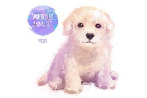 Сute puppy - Labrador