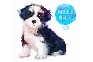 Сute puppy (1)