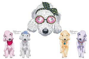 Two dogs Bedlington Terrier SET