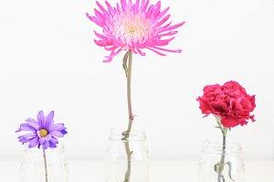 Tall Flowers in Jars