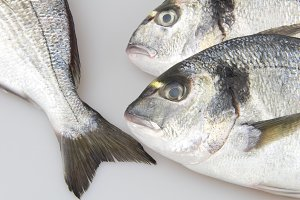 Seabream fish
