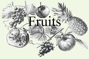 Fruits. Hand drawing.