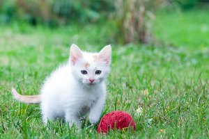 little kitten with a ball of yarn