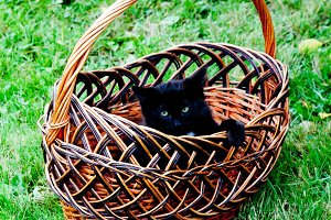 black kitten sitting in a basket