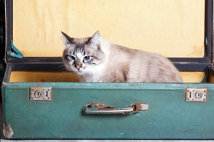 young  cat in an old suitcase