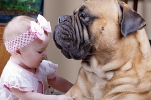 big dog and a little girl