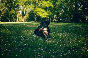 dog on a park