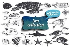 19 sea animals + patterns. Vector