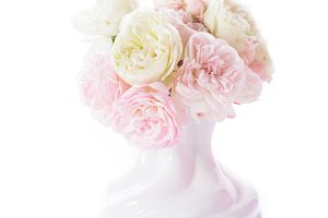 Blooming roses in vase