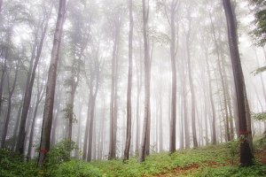 Enchanted green forest with fog
