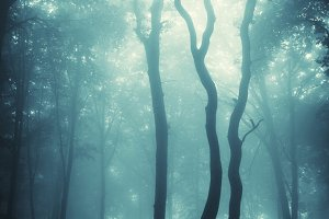Dark mysterious forest with fog