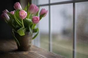 Pail of Spring Tulips