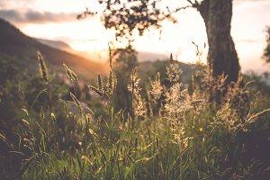 iseeyouphoto sunlitgrass