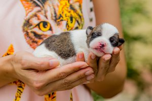 New born puppy