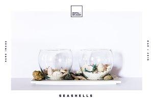 Seashells | Hero Images