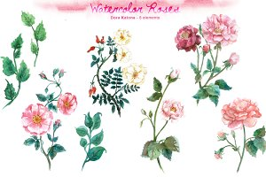 Watercolor Rose Clip Art