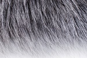 Background of dark fur