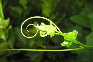 SWIRL OF NATURE