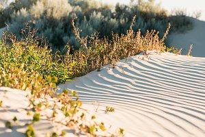 Beachy Sands