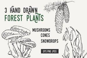 Hand drawn MUSHROOMS CONES SNOWDROPS