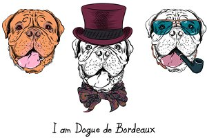 Dog French Mastiff SET