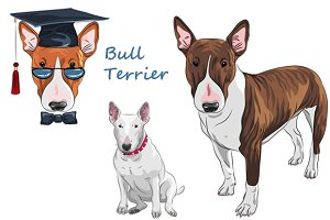 Bull Terrier Dog SET
