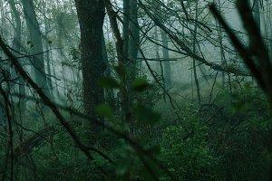 Horror woods #2